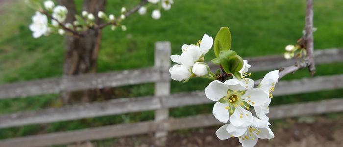 Länk till menygruppen Bygga, bo & miljö, med bild av ett blommande träd